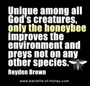 honey bee facts bees are God's unique creatures