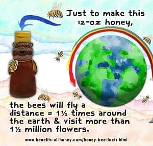 learn honey bee facts bees visit flowers to make honey